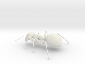 ANT-7inch in White Natural Versatile Plastic