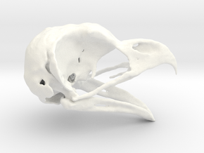 Great Horned Owl Skull - Life sized in White Processed Versatile Plastic