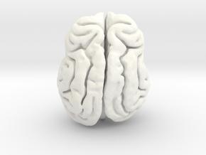 Leopard brain in White Processed Versatile Plastic