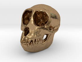 SPIDER MONKEY SKULL - ACTUAL SIZE in Natural Brass