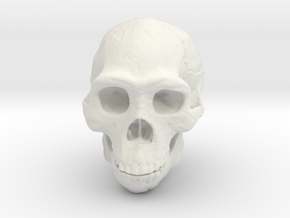 Real Skull : Homo erectus (Scale 1/1) in White Natural Versatile Plastic