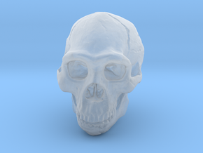 Real Skull : Homo erectus (Scale 1/2) in Smooth Fine Detail Plastic