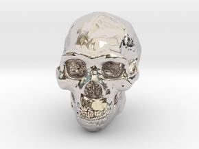 Real Skull : Homo erectus (Scale 1/4) in Platinum