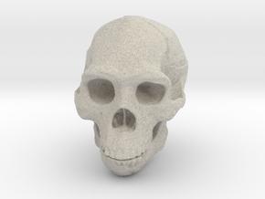 Real Skull : Homo erectus (Scale 1/4) in Natural Sandstone