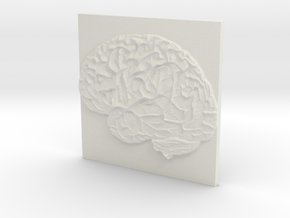 Brain in White Natural Versatile Plastic