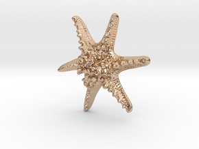 Horned Sea Star in 14k Rose Gold Plated Brass