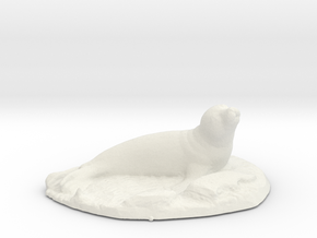 Seal on rocks in White Natural Versatile Plastic