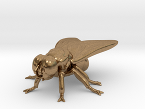 Fly small  in Natural Brass