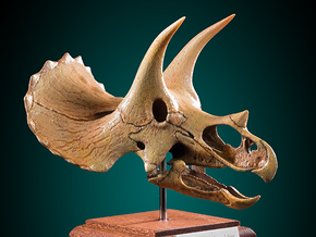 Triceratops skull - dinosaur model in White Natural Versatile Plastic: 1:20