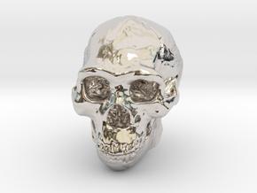 Lanyard : Real Skull (Homo erectus) in Rhodium Plated Brass