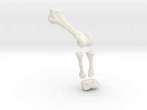 Komodo Left Leg Back 1:5 Scale in White Strong & Flexible