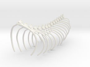 Komodo Spine Rib Cage 1:5 Scale in White Natural Versatile Plastic