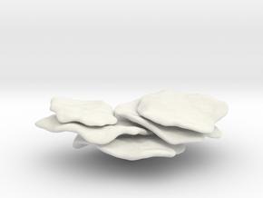 Flattop Coral ,Shelf Coral,(Montipora Capricornis) in White Natural Versatile Plastic: 1:32
