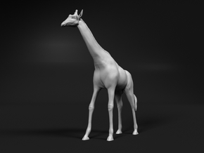 Giraffe 1:32 Standing Male in White Natural Versatile Plastic