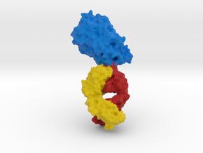 Dopamine Transporter  in Full Color Sandstone