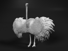Ostrich 1:45 Wings Spread in Smooth Fine Detail Plastic