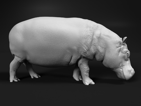 Hippopotamus 1:25 Walking Female in White Natural Versatile Plastic
