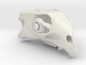 Aquilops americanus 1:1 - Cranium  in White Natural Versatile Plastic
