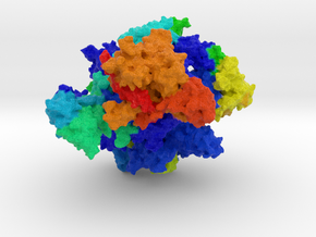 RNA Polymerase III in Full Color Sandstone