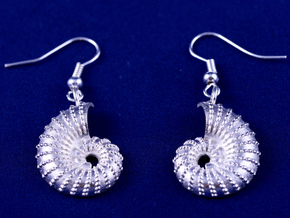 Nautilus Shell Earrings in Raw Silver