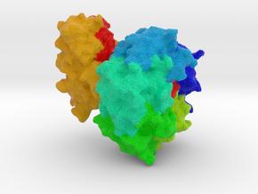 Heat-Labile Enterotoxin in Full Color Sandstone