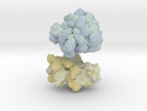 Ribosome Magnet in Full Color Sandstone