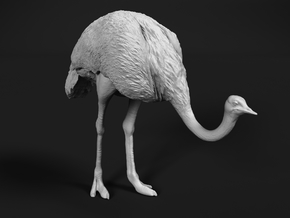 Ostrich 1:6 Head Down in White Natural Versatile Plastic