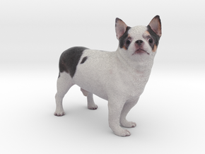 Scanned Chihuahua Dog -890 in Full Color Sandstone