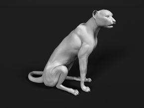 Cheetah 1:16 Sitting Male in White Natural Versatile Plastic