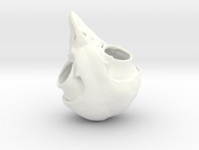 Screech Owl Skull in White Strong & Flexible Polished