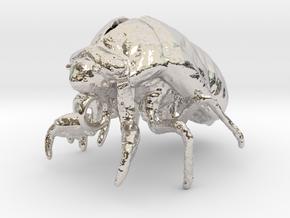 Cicada Nymph Molt Pendant in Rhodium Plated Brass