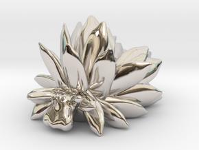 Costasiella Kuroshimae_yellow in Platinum: Small