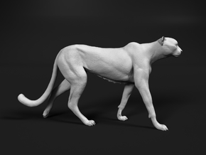 Cheetah 1:12 Walking Male 1 in White Natural Versatile Plastic