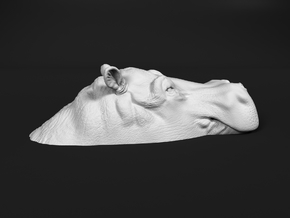 Hippopotamus 1:12 Lying in Water 3 in White Natural Versatile Plastic