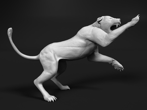 Lion 1:25 Striking Lioness in White Natural Versatile Plastic