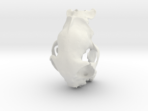 Alice's Cat Skull in White Natural Versatile Plastic