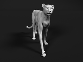 Cheetah 1:35 Walking Male 2 in White Natural Versatile Plastic
