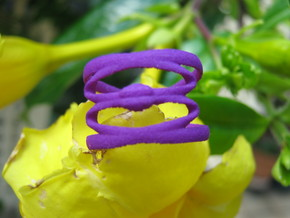 Conchoid 3 Ring in Purple Strong & Flexible Polished
