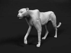 Cheetah 1:35 Walking Male 3 in White Natural Versatile Plastic