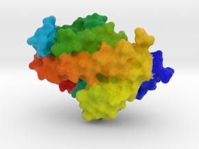 Calcitriol Receptor in Full Color Sandstone