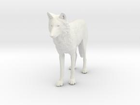 North American Gray Wolf - Small in White Natural Versatile Plastic