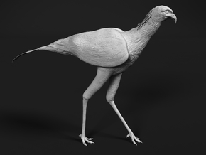 Secretarybird 1:64 Walking in Smooth Fine Detail Plastic
