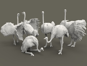 Ostrich Set 1:160 five different pieces in Smooth Fine Detail Plastic