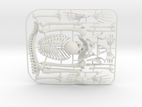 Human Skeleton Kit_v01 in White Natural Versatile Plastic