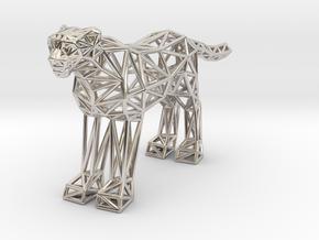 Cheetah (adult) in Platinum