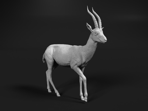 Thomson's Gazelle 1:45 Walking Male in Smooth Fine Detail Plastic