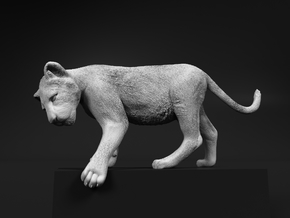 Lion 1:15 Cub reaching for something in White Natural Versatile Plastic