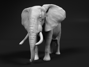 African Bush Elephant 1:45 Standing Male in White Natural Versatile Plastic