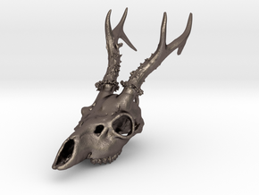 Capreolus skull with teeth in Polished Bronzed-Silver Steel