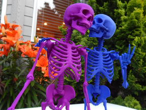 Mr Bones -- Articulated Skeleton in White Processed Versatile Plastic